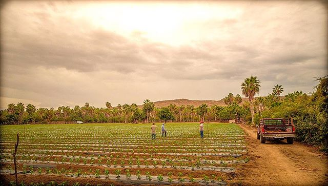 Field day in old Todos Santos. . . . . . . . #farmtotable #baja#rainorshine #simplify #harmonize#realestate and #dreamsforsale #comedindme