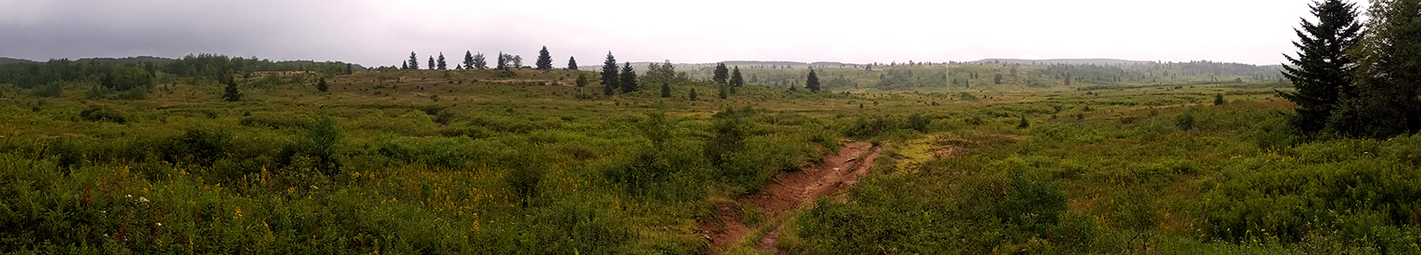 The high meadows of Dolly Sods