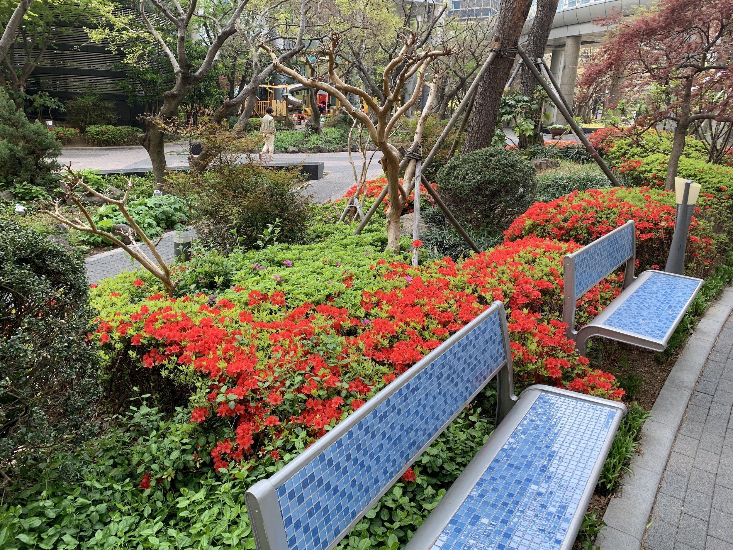 Spring in Busan부산의 봄꽃색깔 완전 예쁘다.
