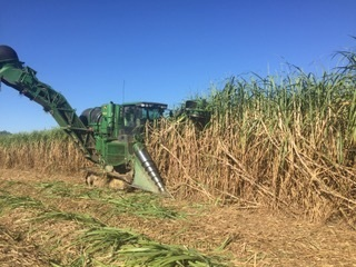 HarvestingSugarCane.jpg
