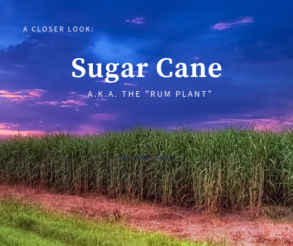 "- Did you know that even though rum is made from sugar cane, it comes out of the still sugar-free and carb-free? Learn more with this inside look at the ""rum plant."" :)"