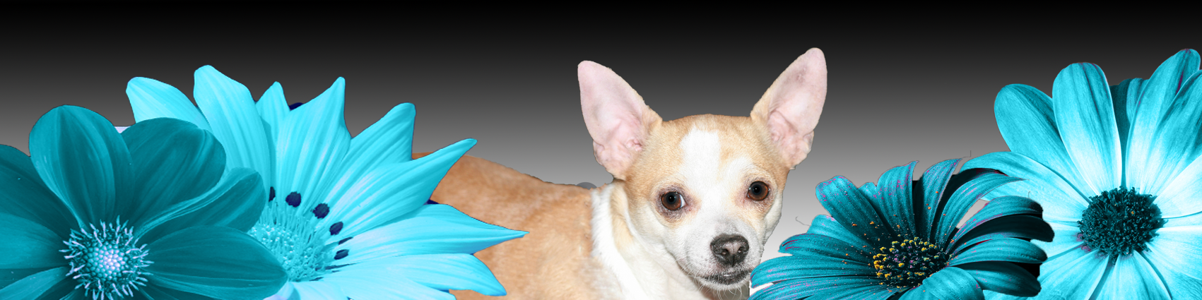 ollie-banner2.png