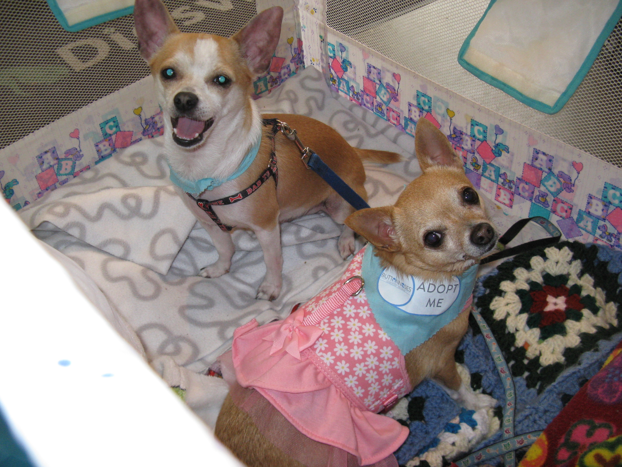 Sophie V and Ollie T hanging out at the adoption event