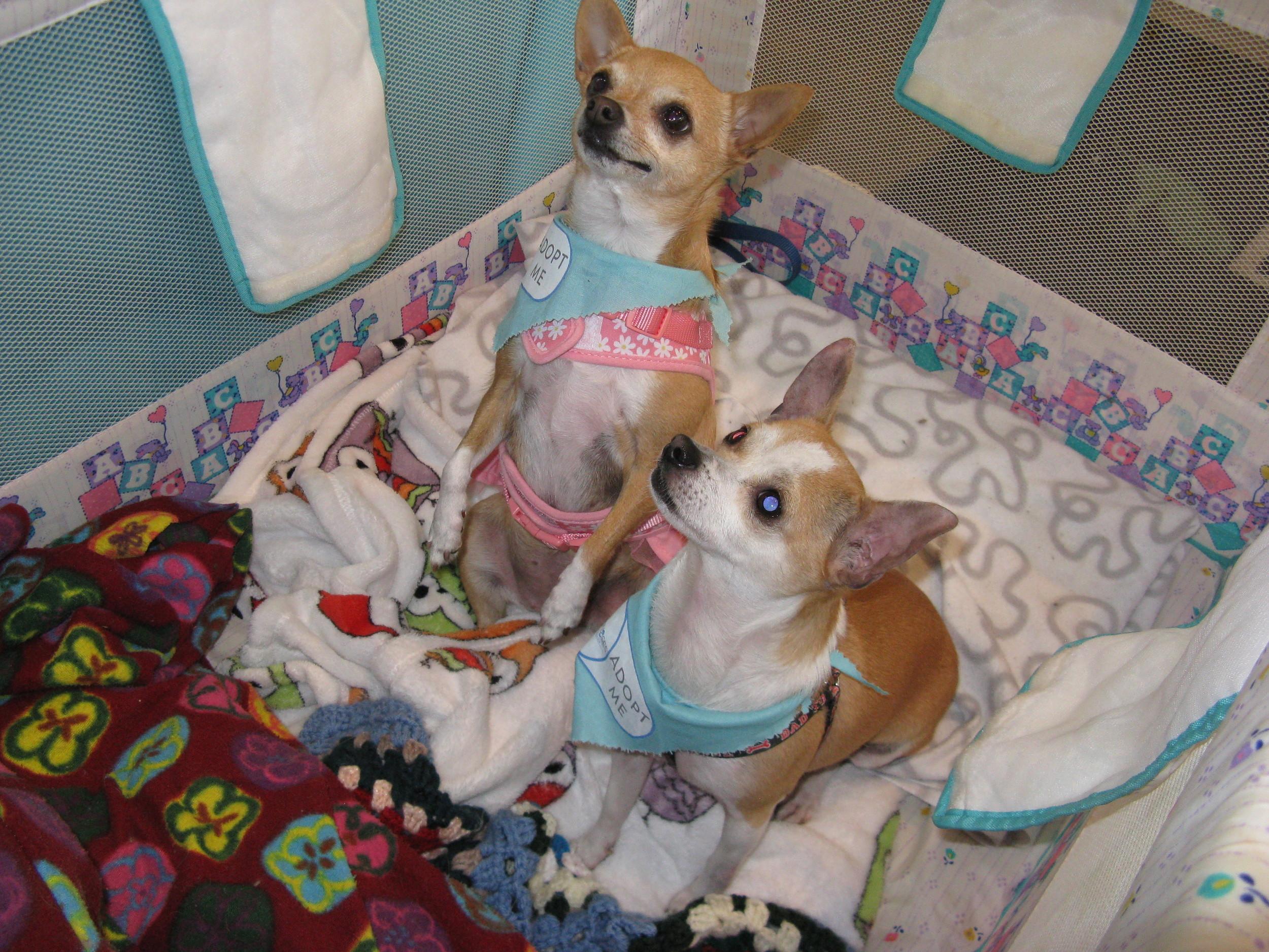 Ollie T and Sophie V