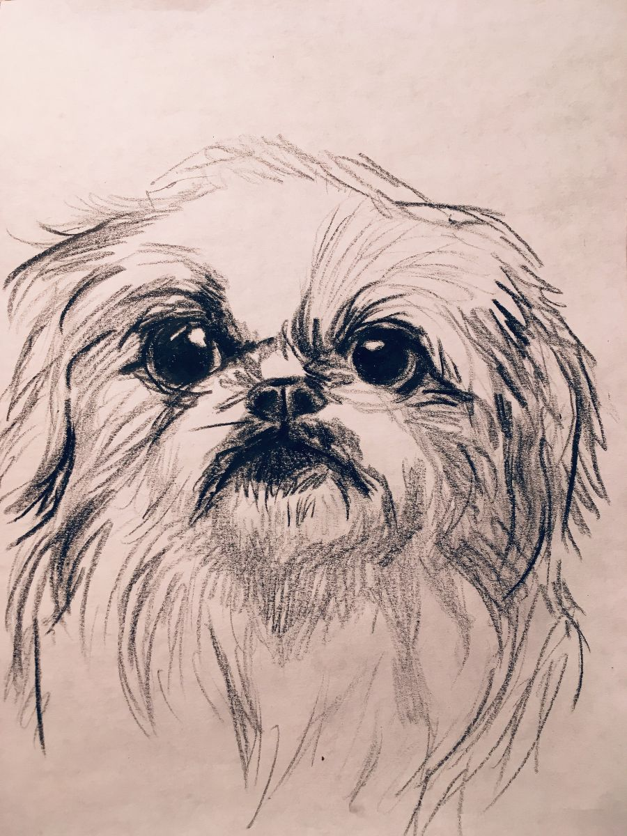 Check this out! - At the event, Katie will also be doing charcoal drawings of five lucky dogs for $40 each (like the one that she did for Yuki, pictured here), with part of the proceeds going to BUTTONNOSES. The drawings will be done on a first-come, first-serve basis, so secure a spot for your pup by emailing info@buttonnoses.com.