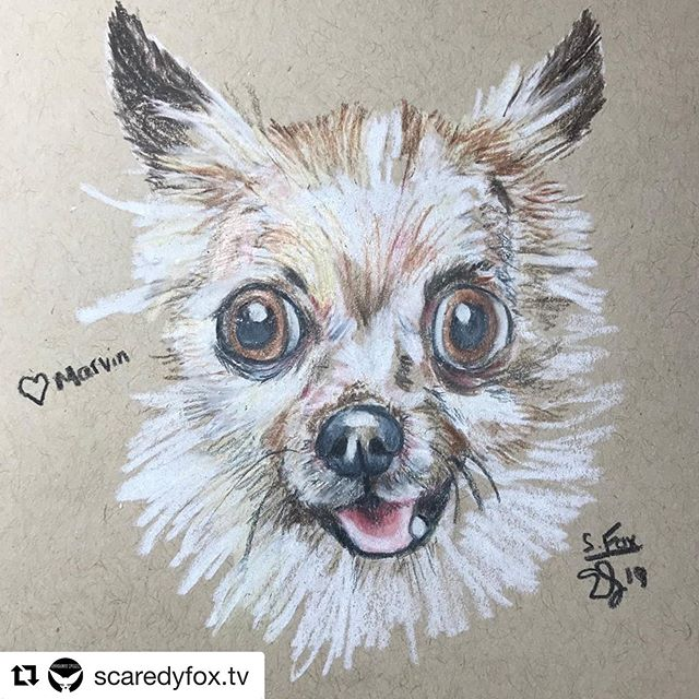 #Repost @scaredyfox.tv with @get_repost ・・・ Today is a very special day. Here is my first drawing of the day. Love you always Marvin. 💚🦊🐾We are having a #charitystream for Marvin's Legacy Foundation supporting senior and special-needs #rescuedogs Join nine #twitch streamer as they draw nine adorable TODAY @buttonnoses puppers! Please re-share and we hope to see you in chat! 🥰💚🐾🦊#twitchstreamer #twitchcommunity #twitchfam #twitchaffiliate #twitchcharity #rescuedogsofinstagram #rescuedog #weloverescuedogs #seniorrescuedog #specialneedsdogs #twitchart #twitchartist #dogsofinstagram #dogart #dogsketch #dogportrait
