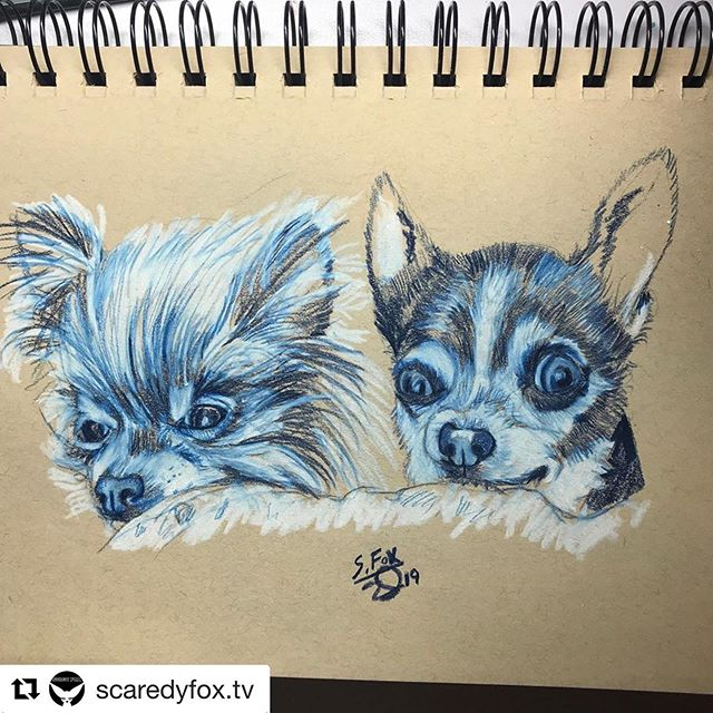 #Repost @scaredyfox.tv with @get_repost ・・・ Adorable puppers from @buttonnoses @bluthechi 🐾💚#scaredyfoxtv #dogportrait #dogdrawing #dogartist #dogart #dogsketch  #doglife #dogs #dogsofinstgram #prismacolor #prismacolorpencils #chihuahuasofinstagram instagram #twitch #twitchstreamer #twitchaffiliate #twitchcreative #twitchartist #rescuedog #rescuedogsofinstagram