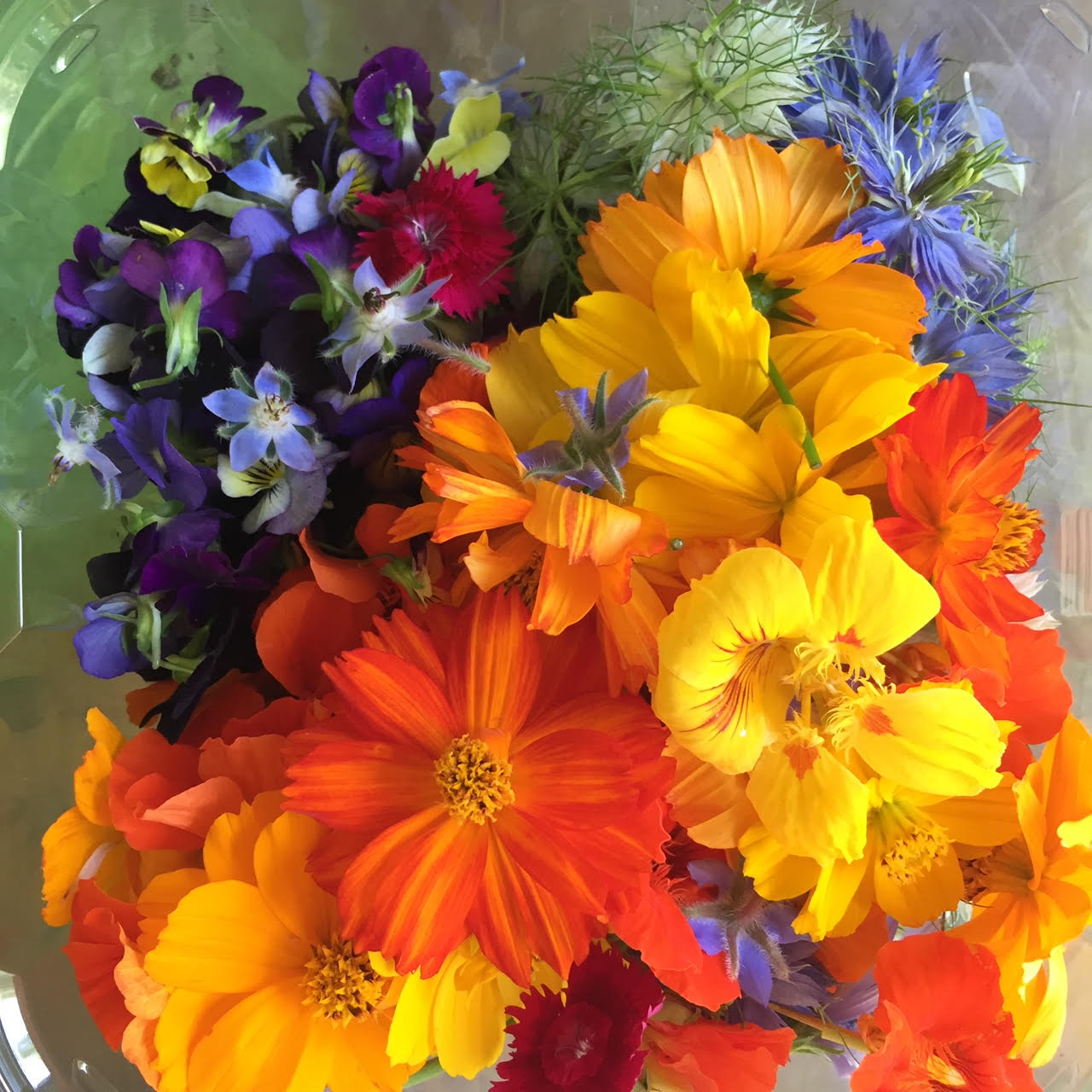 Edible Flowers mix.jpg