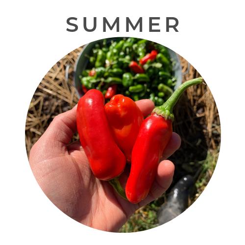 Summer Garden 2019.png