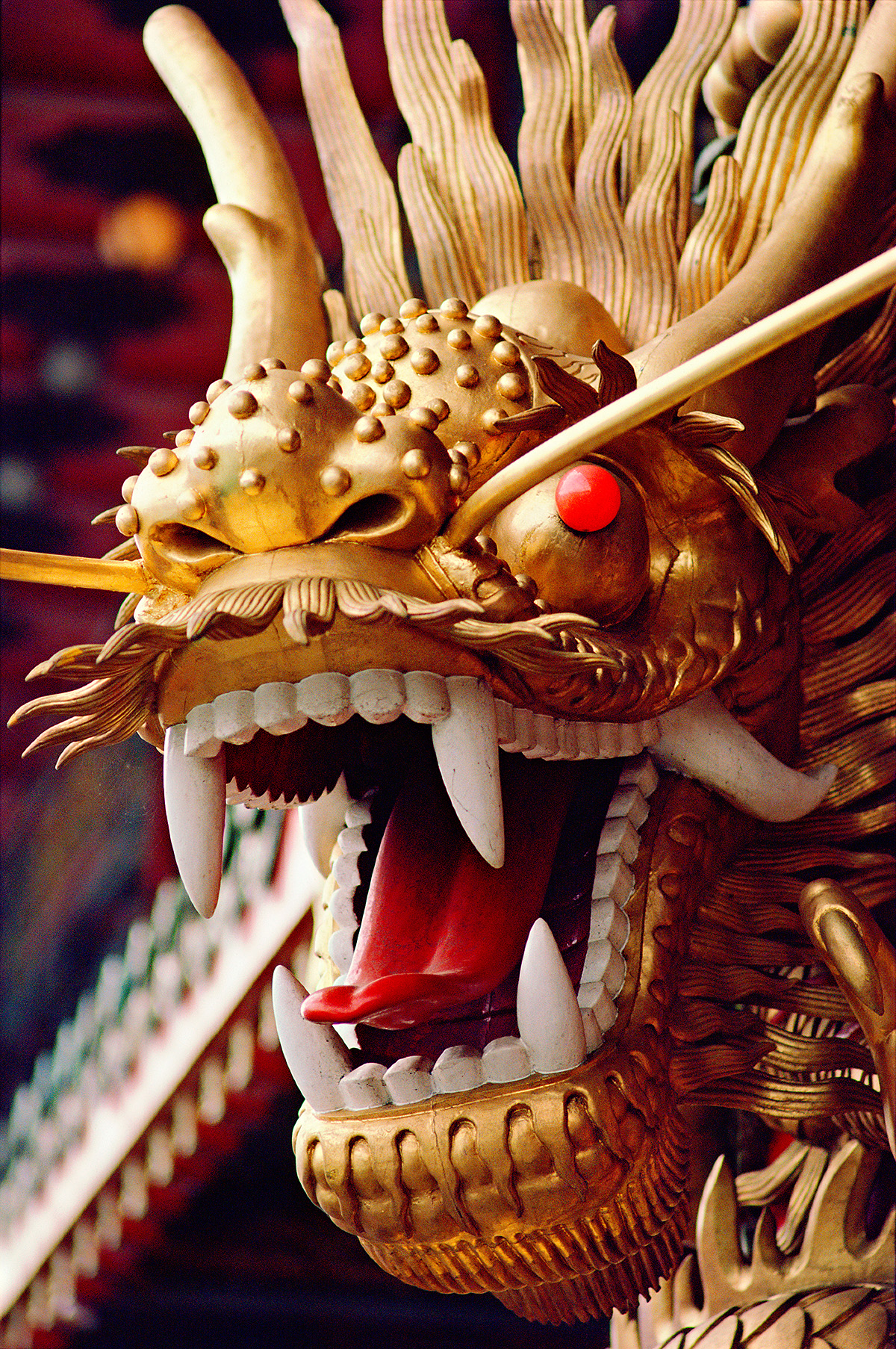 dragon01peter_v2crop1200.jpg