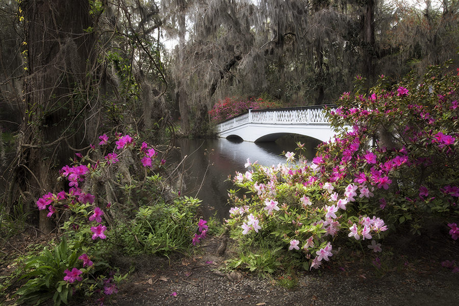 Charleston Spring 23.jpg