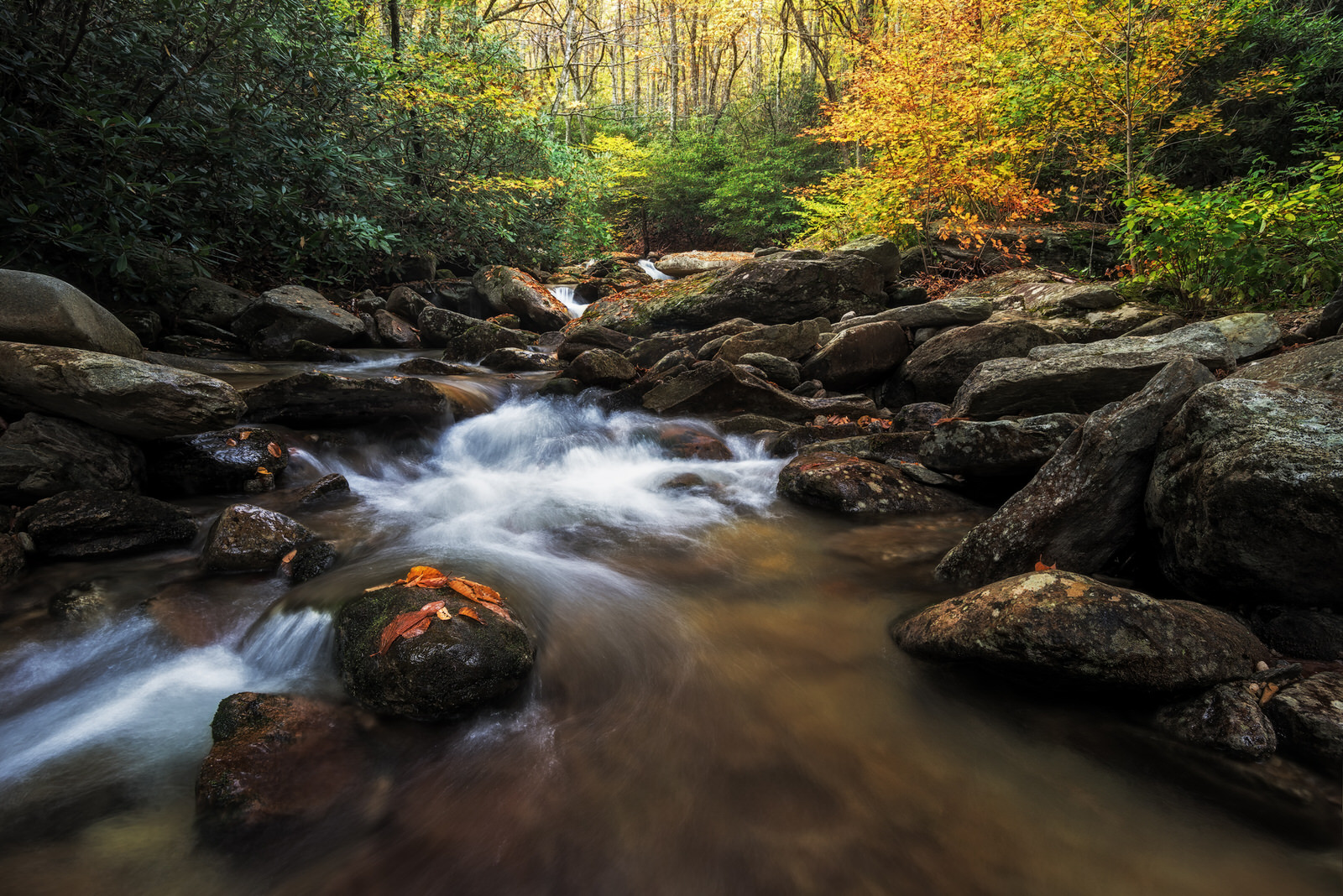 Fall Foliage Photography NC.jpg