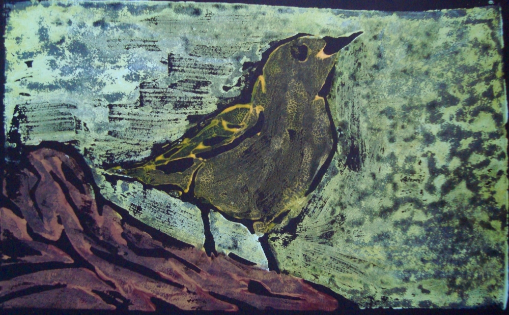 American yellow warbler 5