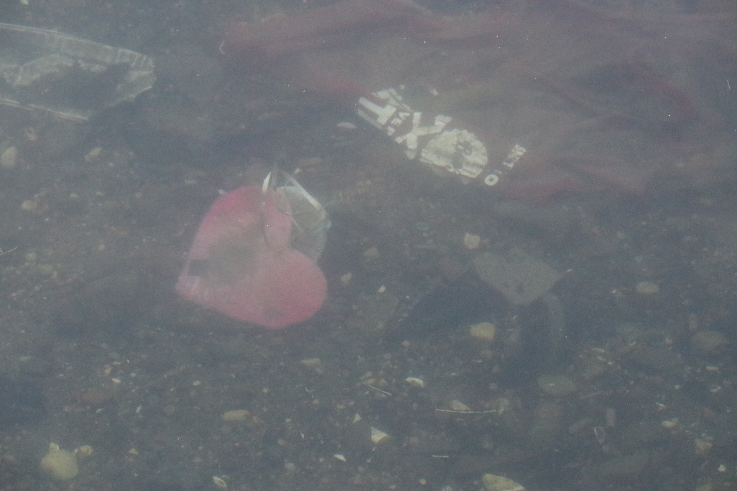©Erica Cirino. Close-up of trash (mostly plastic) next to mute swan.