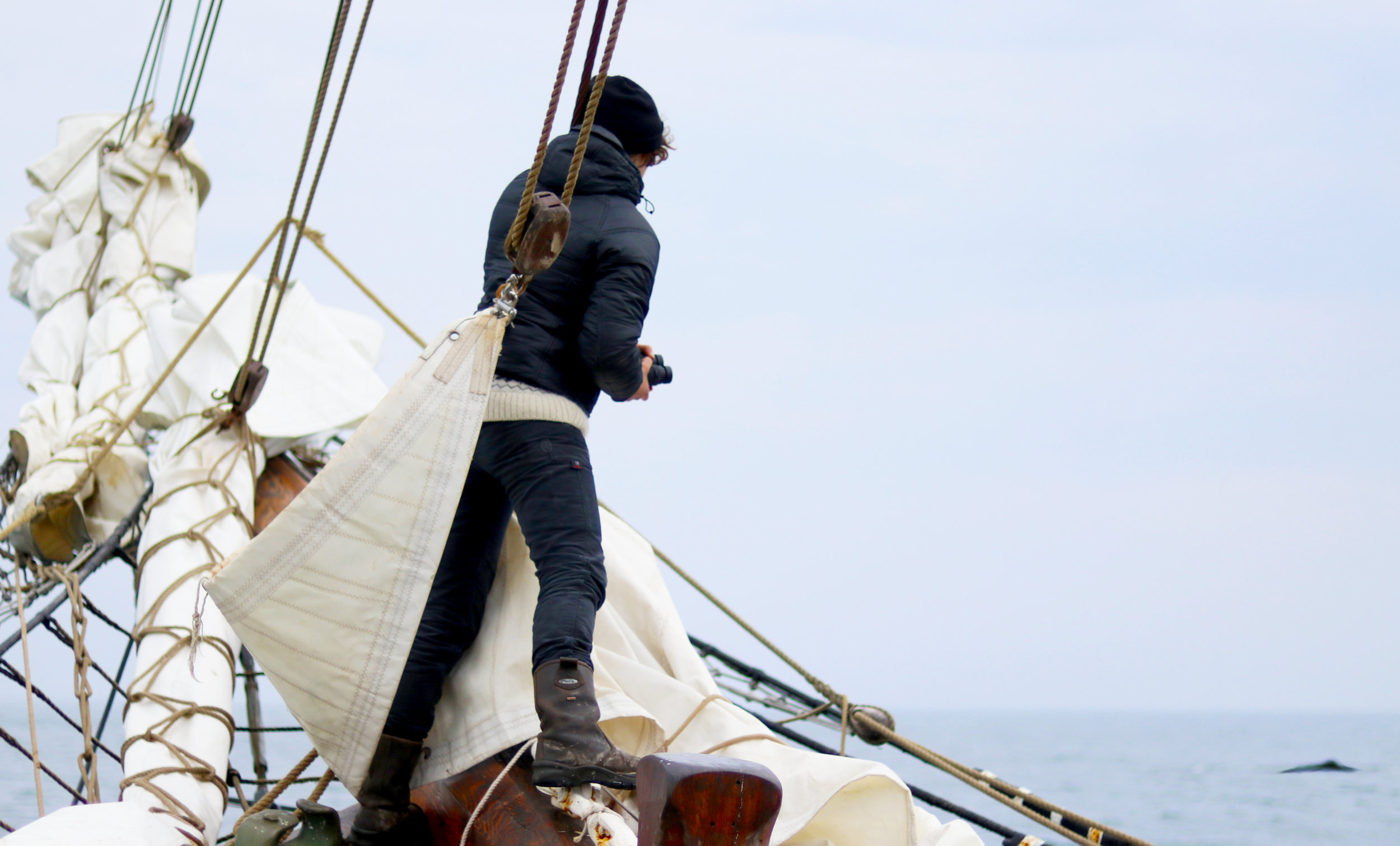 Photo: Searching for whales. ©Erica Cirino