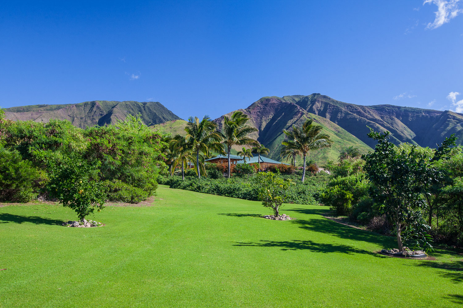beautifully-maintained-maui-property-chris-curtis-landscapes.jpg