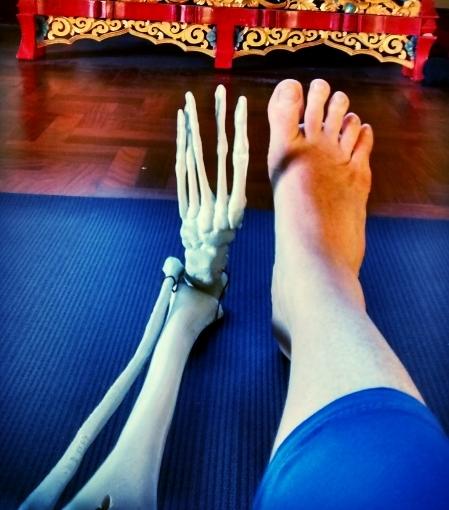 Functional Anatomy: Yoga & Your Body