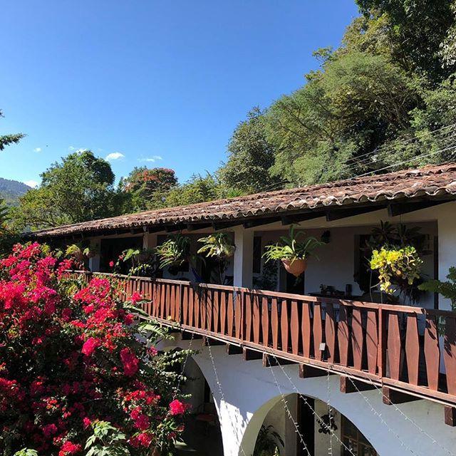 Blue! #hotel #copan #tranquil #corridor #garden #centralamerica #honduras