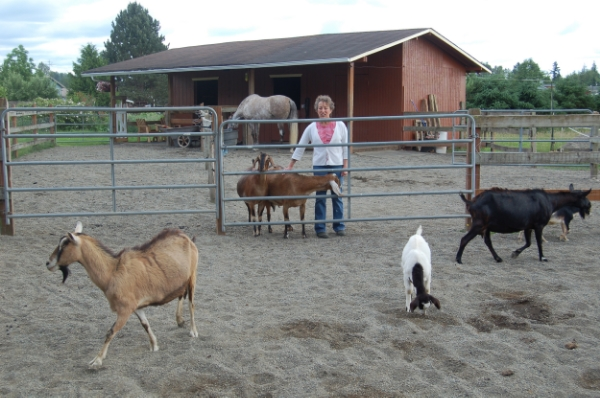 Horses can be happy with surrogate 'herds,' but are rarely happy being alone.