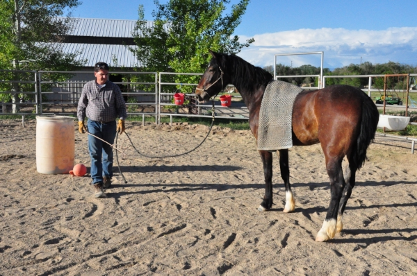 If you don't have enough room for an arena, a round pen can be a great place to get some training done. Make sure the size of the pen and depth of the footing will work safely for your discipline and for the health of your horses joints and tendons.