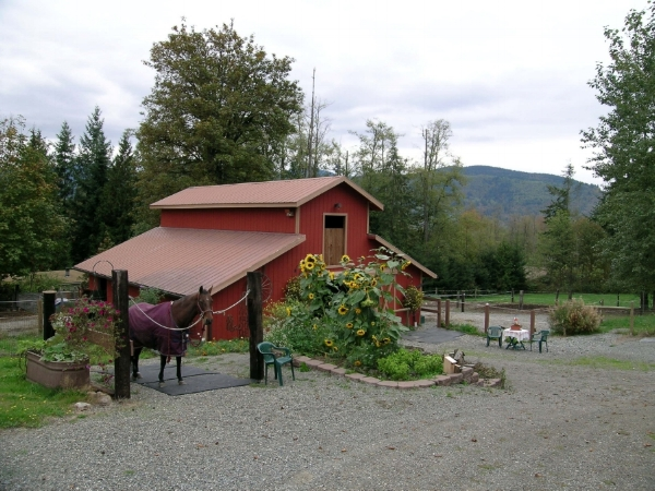 1- barn after with mud, manure & drainage management.JPG