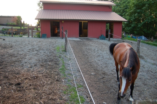 3 - same stall with mud & manure management, paddack footing, gutters & downspouts.JPG