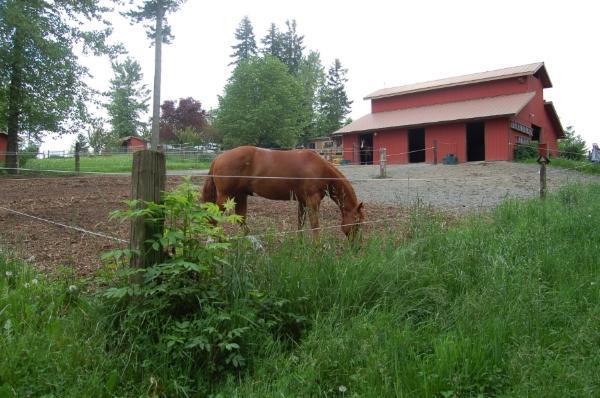 4 - same barn, no mud now & productive pastures too.JPG