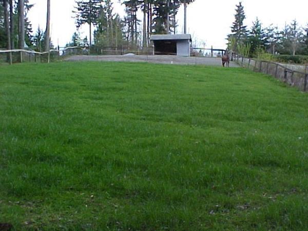 5 - same pasture after rennovation & management.jpg