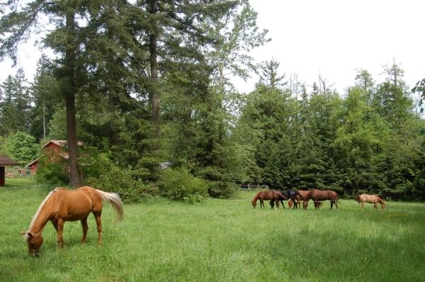 rotational grazing with wildlife enhancement in center.JPG