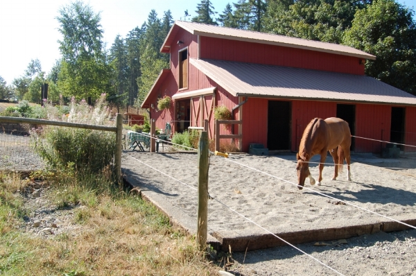 sand paddock, slopes away for good drainage on main barn.JPG