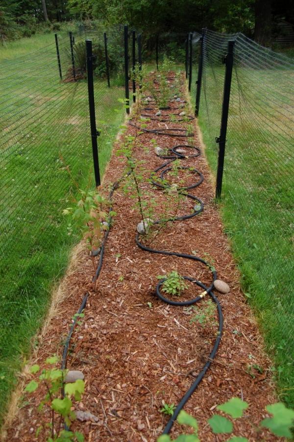 Hedge Row Planting.JPG