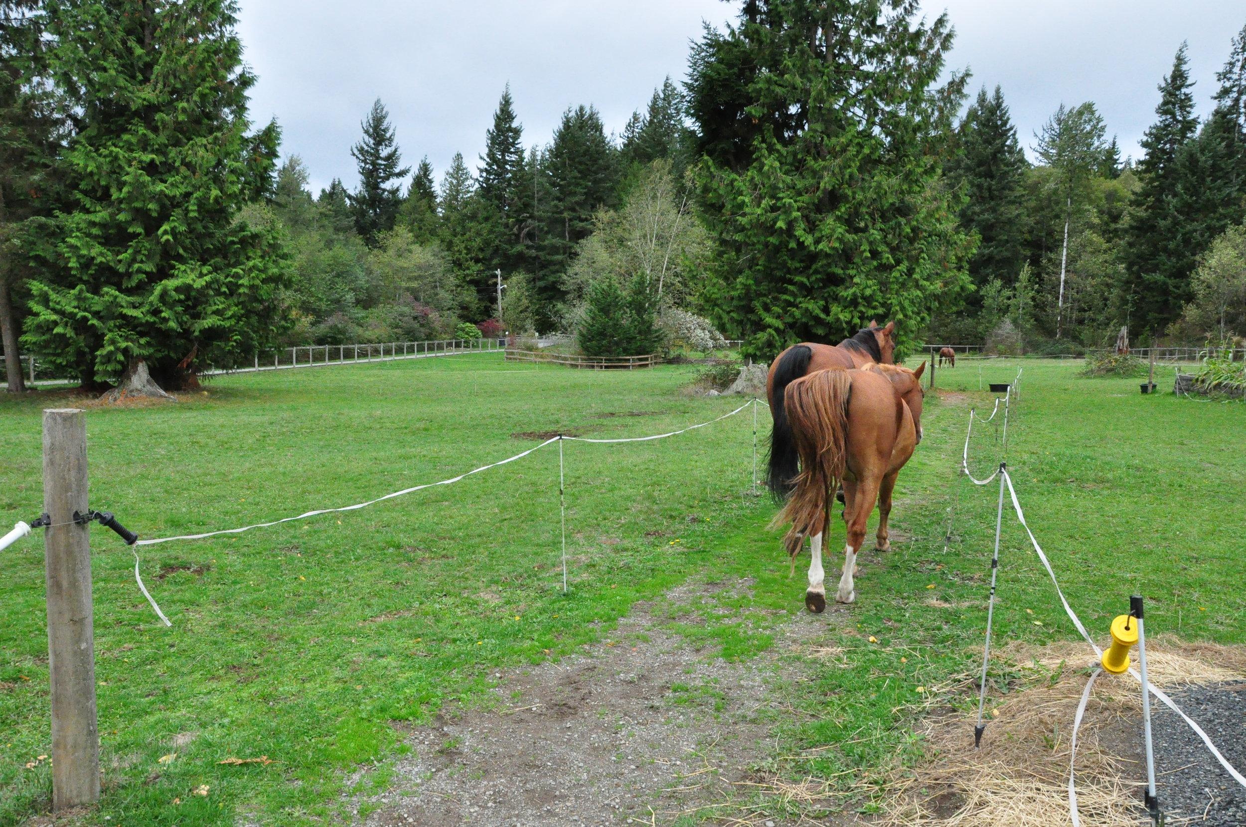 Laneways to grazing areas.JPG