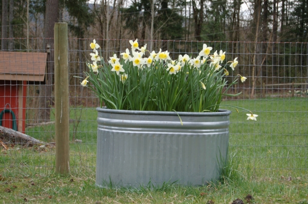 use finished compost in flower beds.JPG
