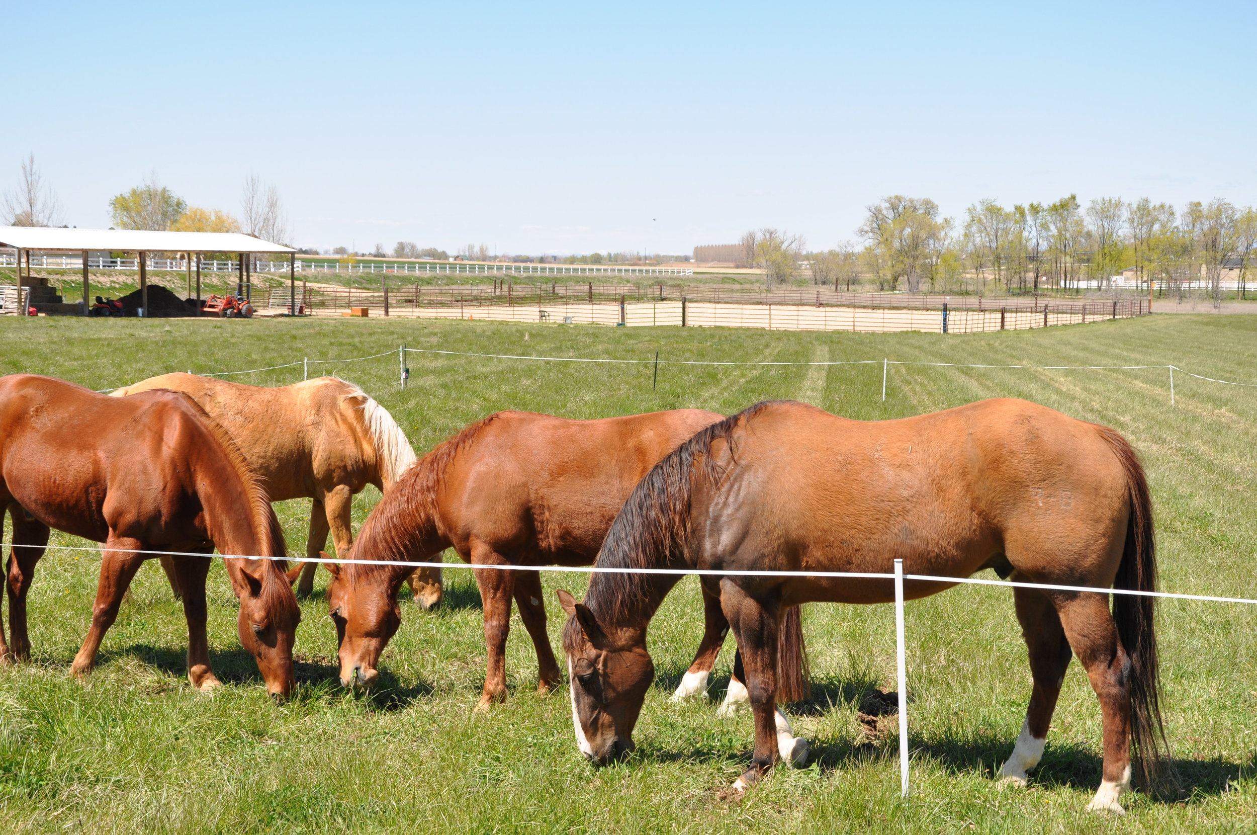 our horses in pasture (10).JPG