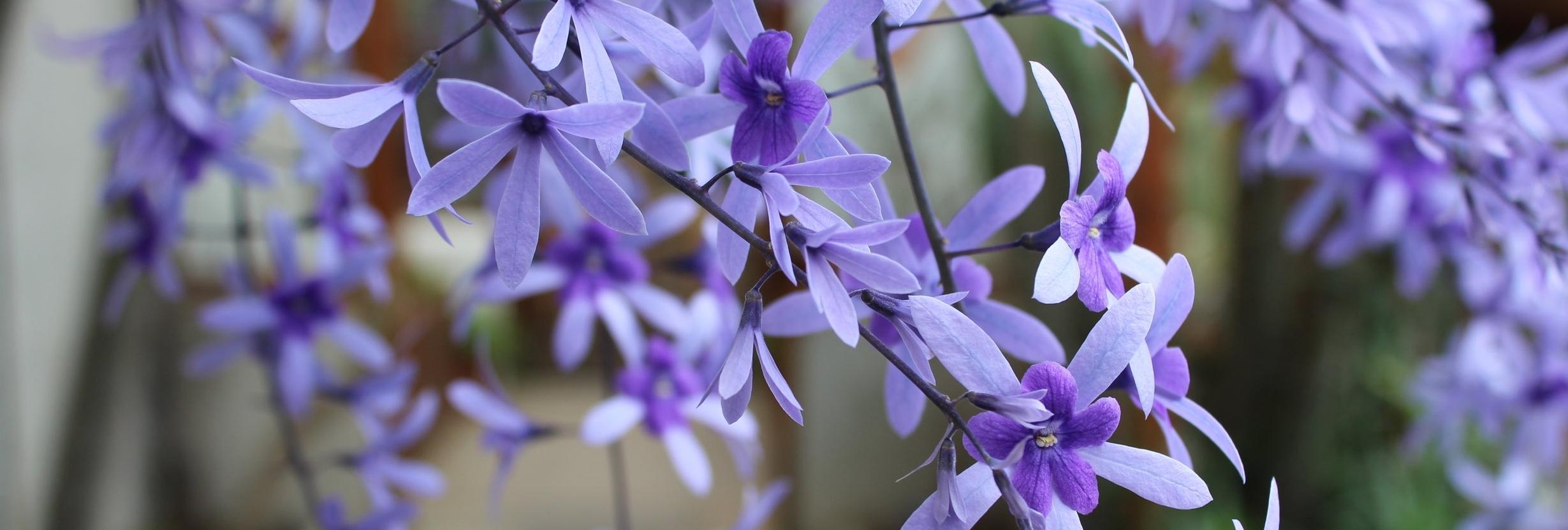 Purple flowers for websiteTT.JPG