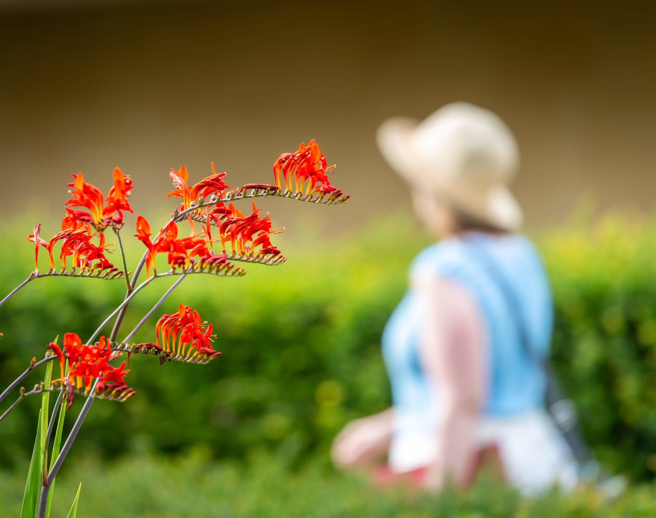 Botn Gdn red flower and figure **.jpg
