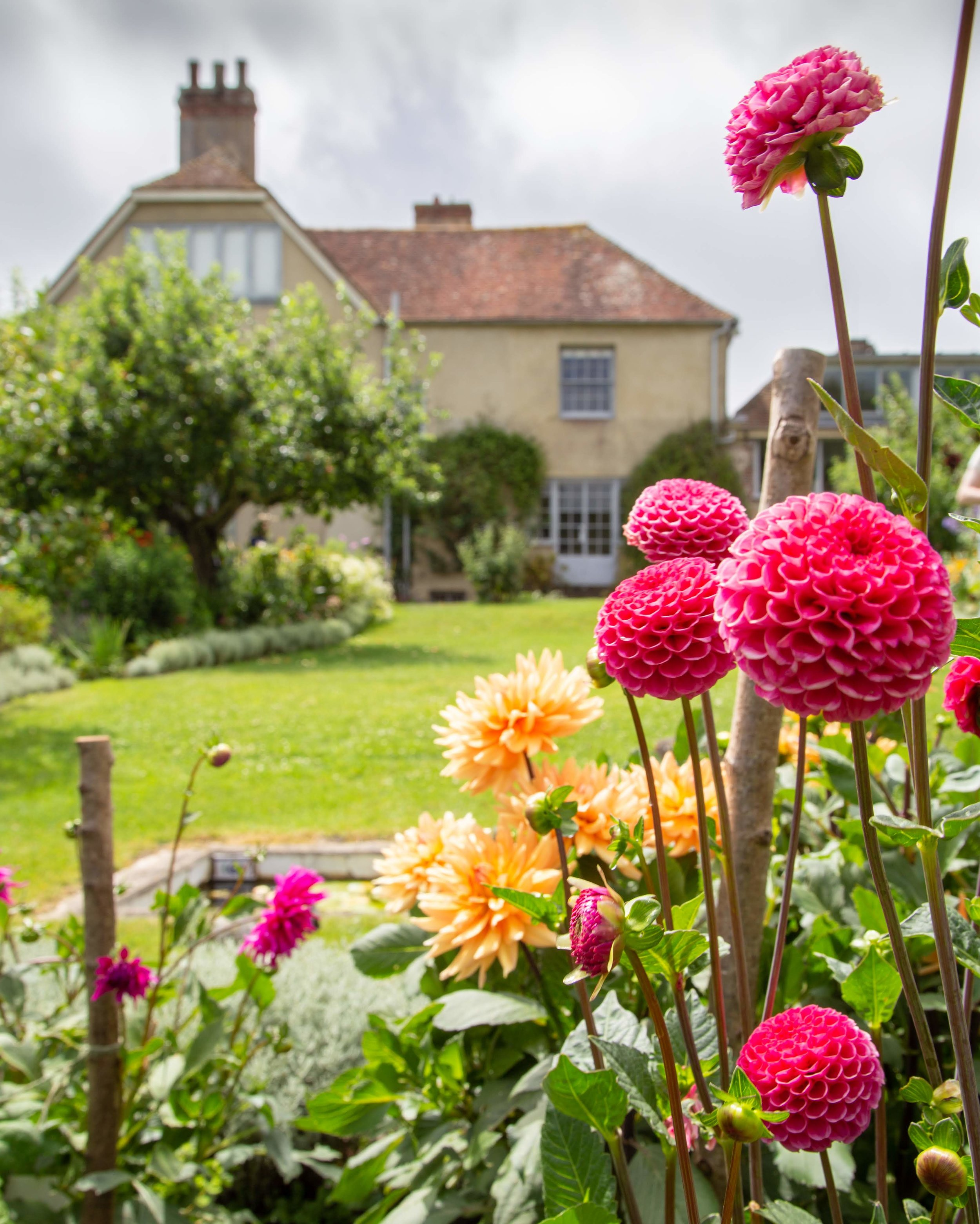 Charleston dahlias + house **.jpg