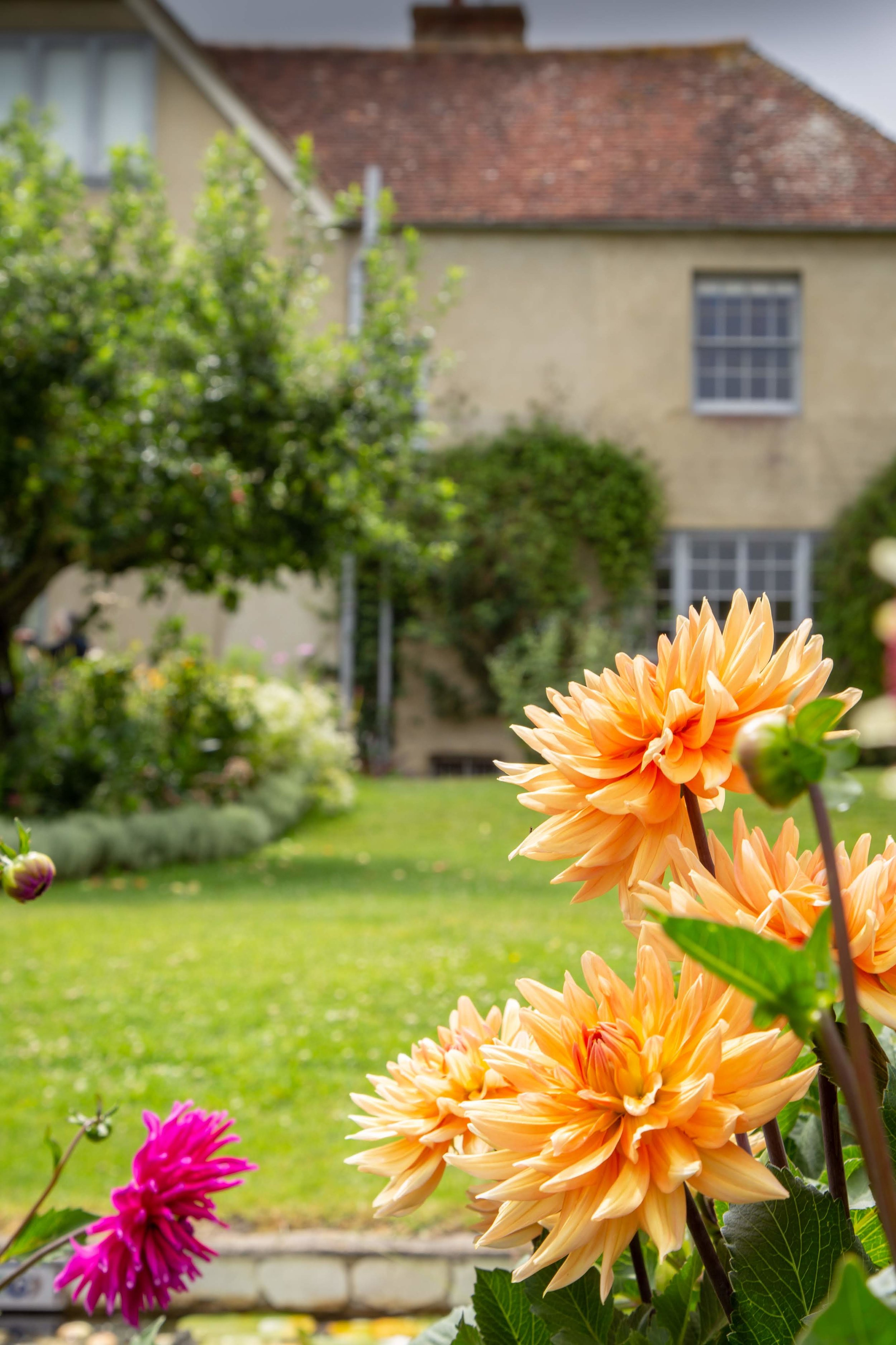 Charleston yellow dahlias + house 2019 **.jpg