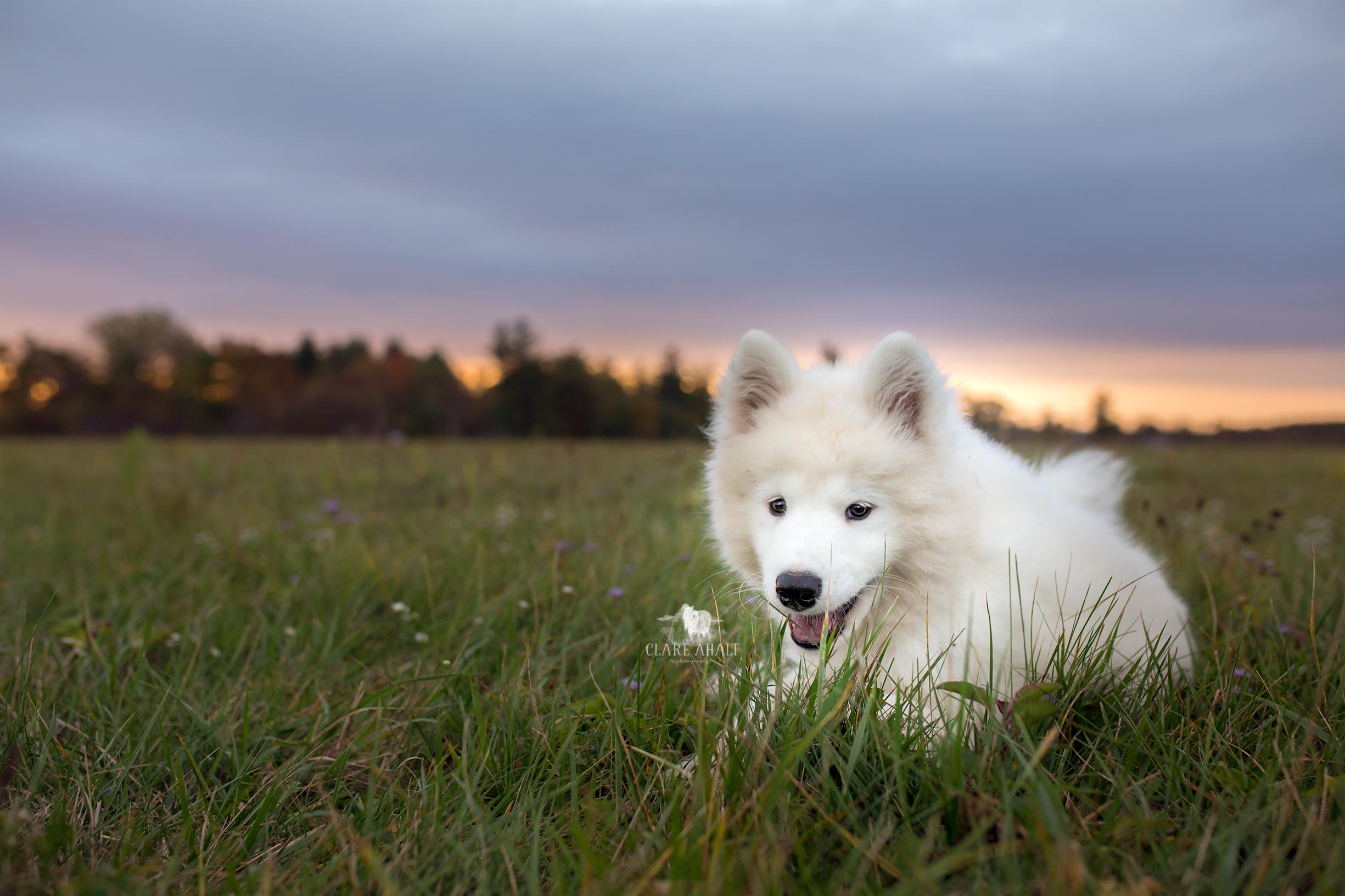 frederick-maryland-pet-portrait-photographer