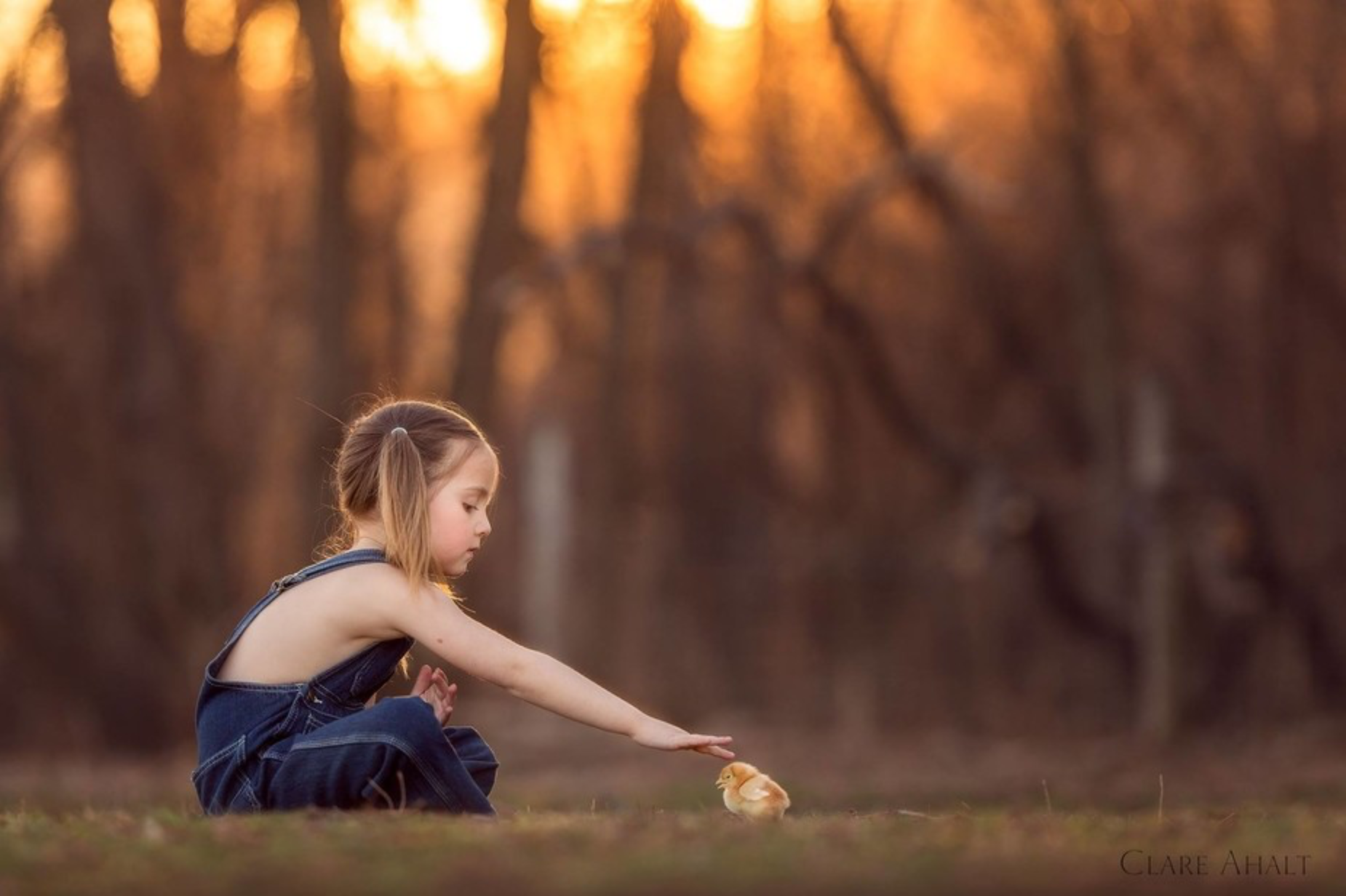 Photograph of a little girl in a field with a baby chick, photographed on a farm in Maryland by Clare Ahalt Photography, a fine art photographer located in central Maryland, specializing in fine art child portraiture and high school senior portraits.