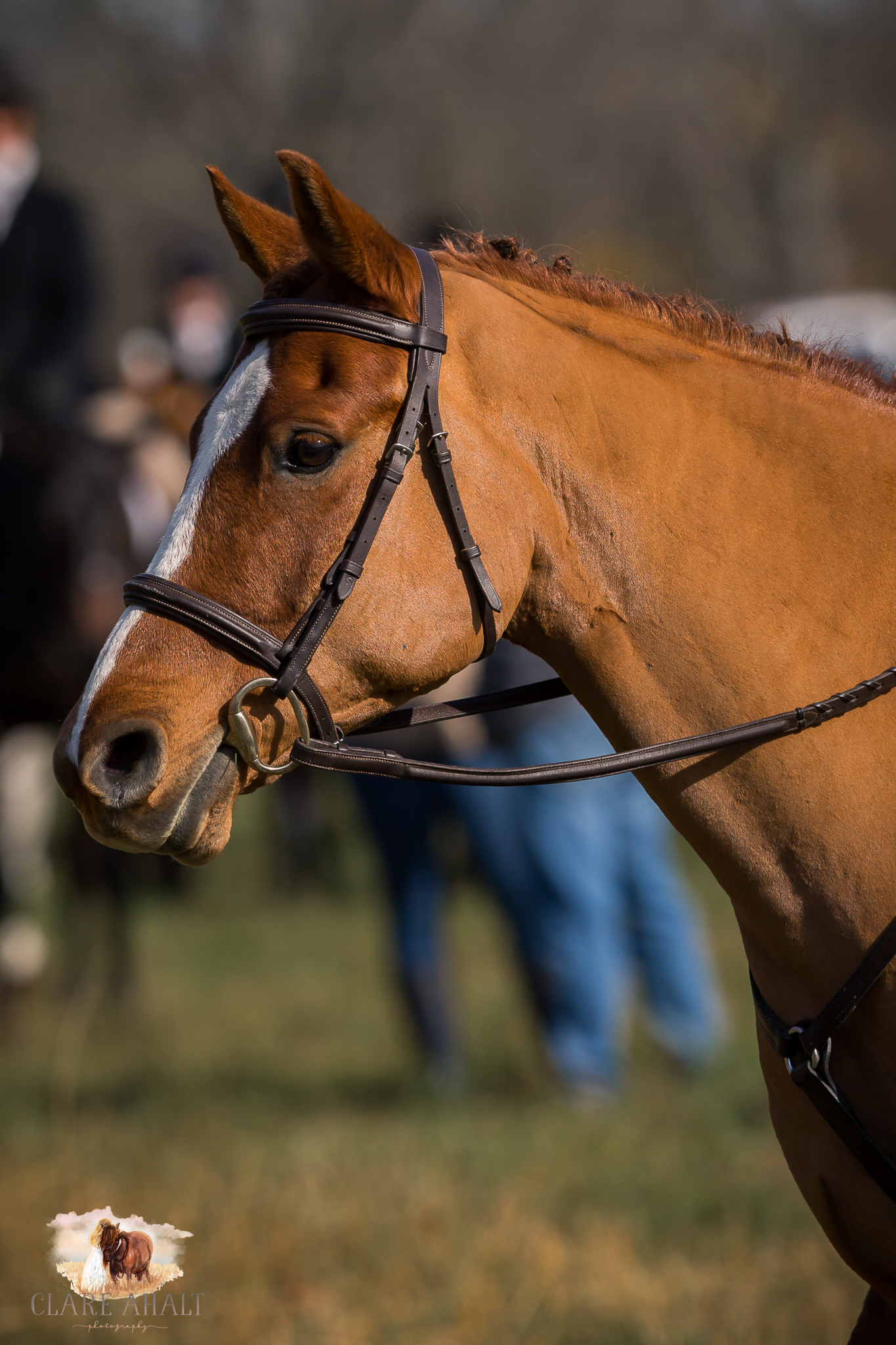 Best_Equestrian_Photographer_Maryland_equine_photographer_northern_virginia_equestrian_Photographer-13.jpg