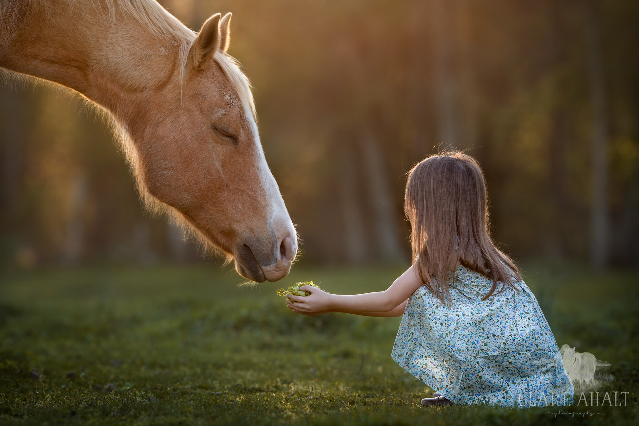 I am so thankful for the warm weather, it provides the best temperatures to photograph my horse and children :)   I photographed my daughter feeding grass to my palomino horse on one of the first warm days in Spring on my farm in Frederick Md.  I love the colours and the light at this time of year.