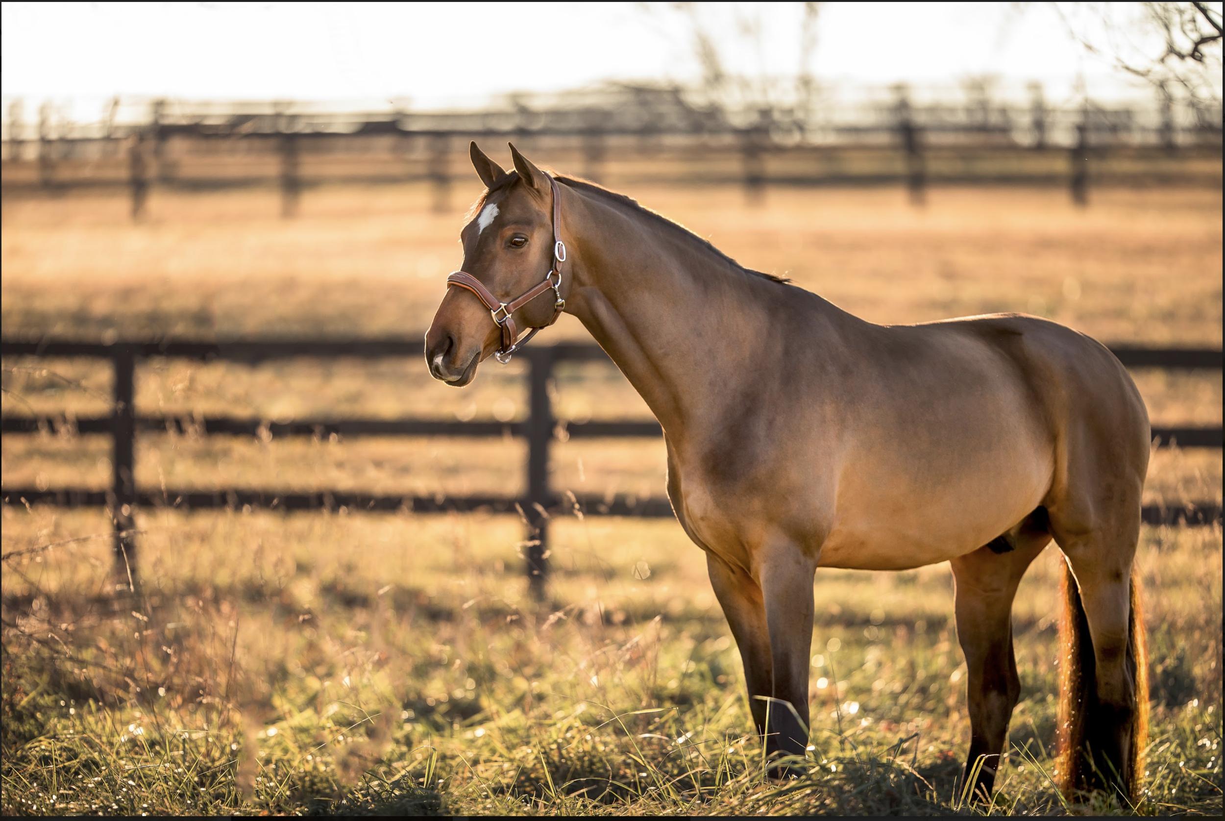 potomac_md_equine_photographer_middleburg_VA_equine_portraits_middletown_MD_photographer.png
