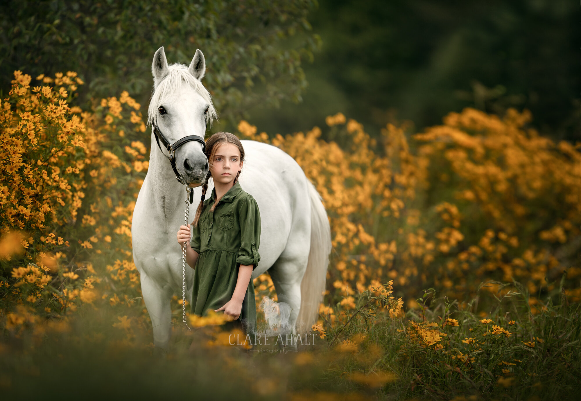 equine_portrait_photography_potomac_MD_equine_photographer_middleburg_VA-1.jpg