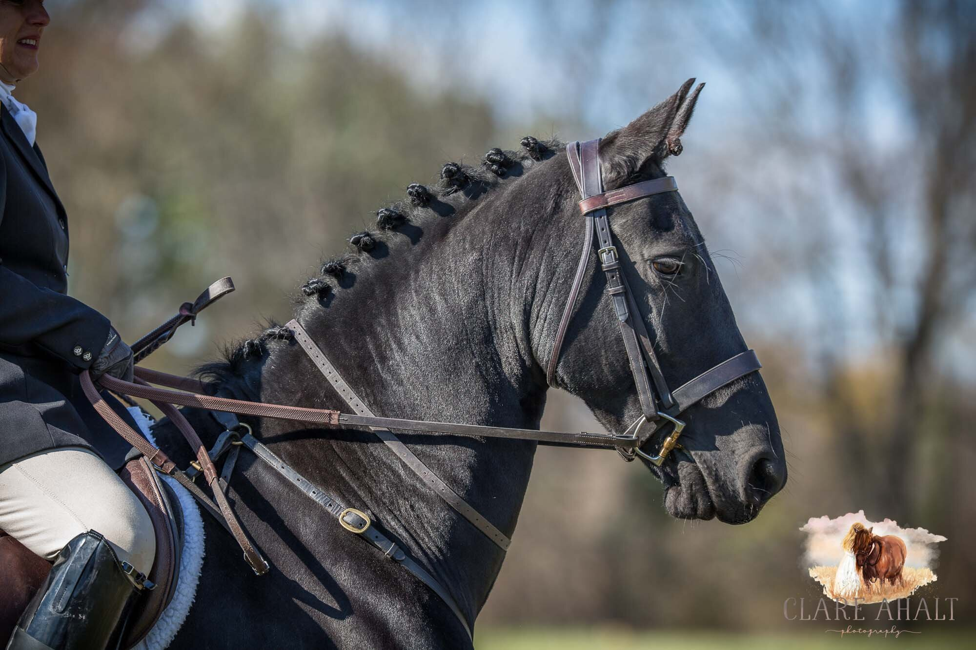 equine_photographer_potomac_md_equine_photographer_middleburg_VA_equine_portraiture_loudon_county_VA-2829.jpg