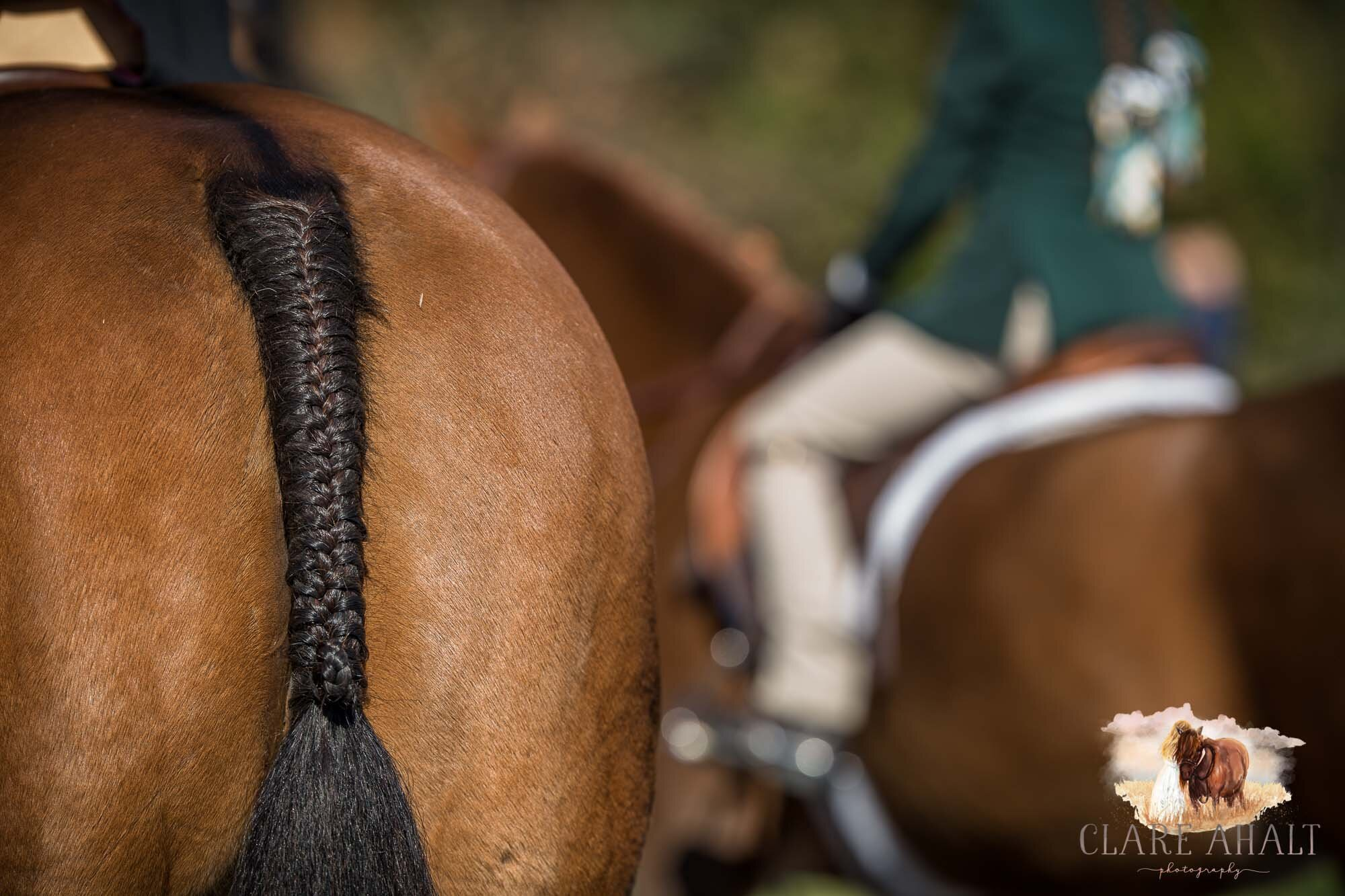 equine_photographer_potomac_md_equine_photographer_middleburg_VA_equine_portraiture_loudon_county_VA-2886.jpg