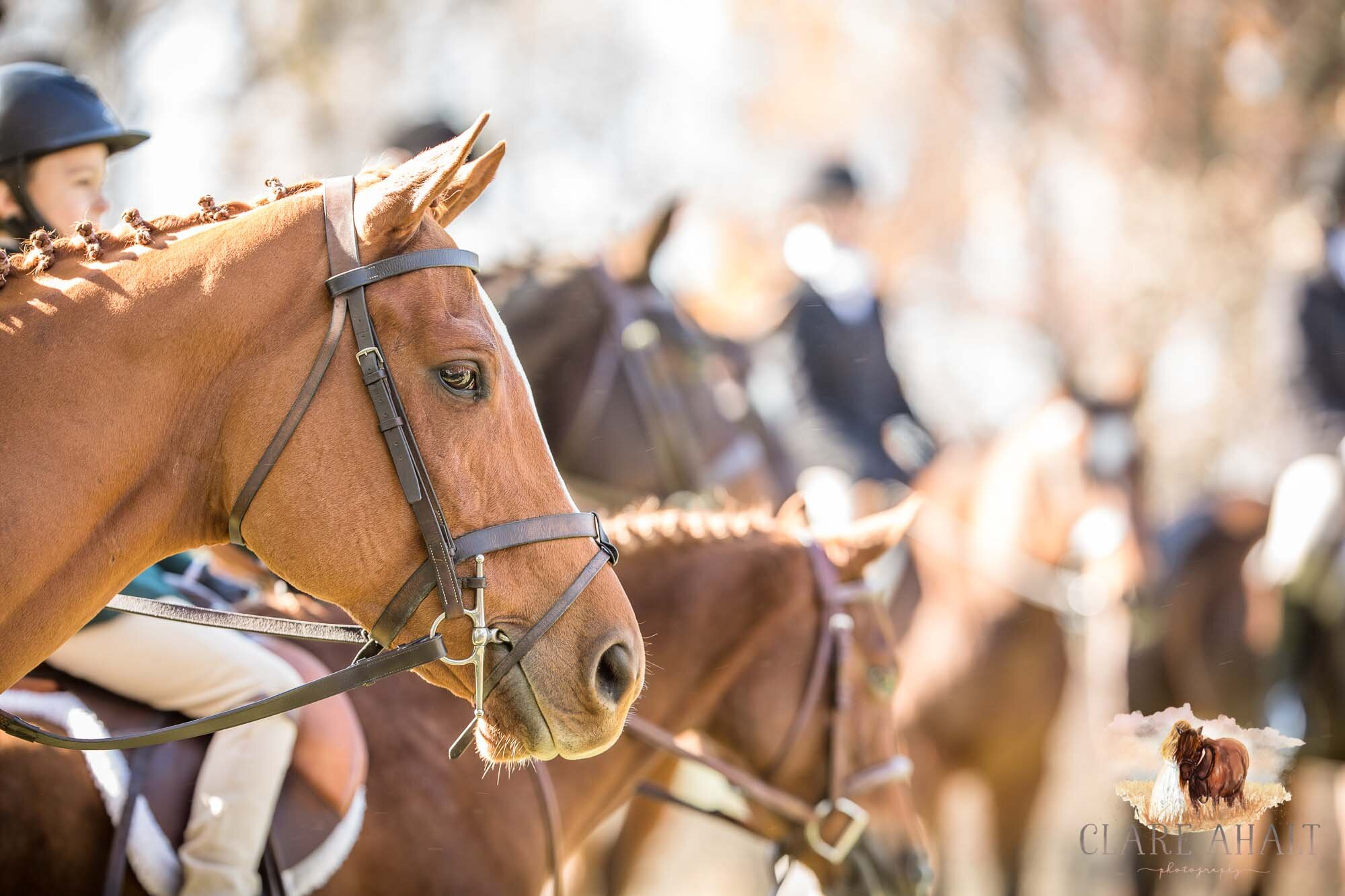 equine_photographer_potomac_md_equine_photographer_middleburg_VA_equine_portraiture_loudon_county_VA-2924.jpg