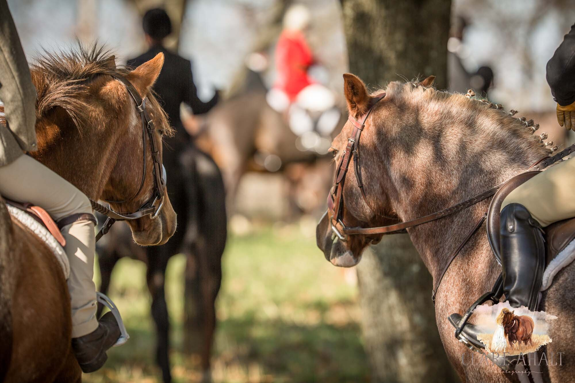 equine_photographer_potomac_md_equine_photographer_middleburg_VA_equine_portraiture_loudon_county_VA-2932.jpg
