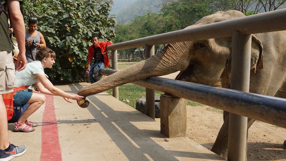 Feeding the elephants at the beginning of our tour