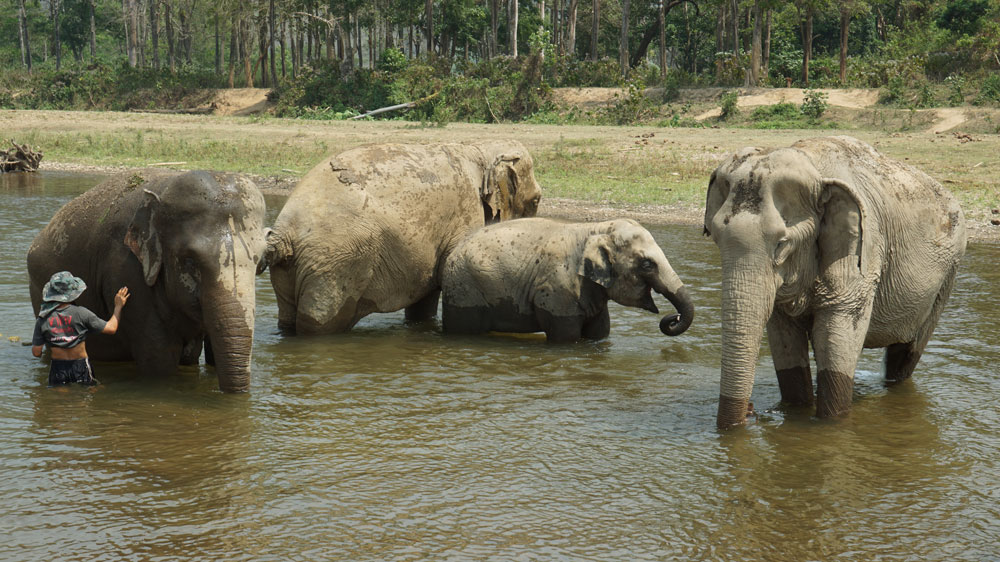We were a little jealous that the elephants got to cool off in the river